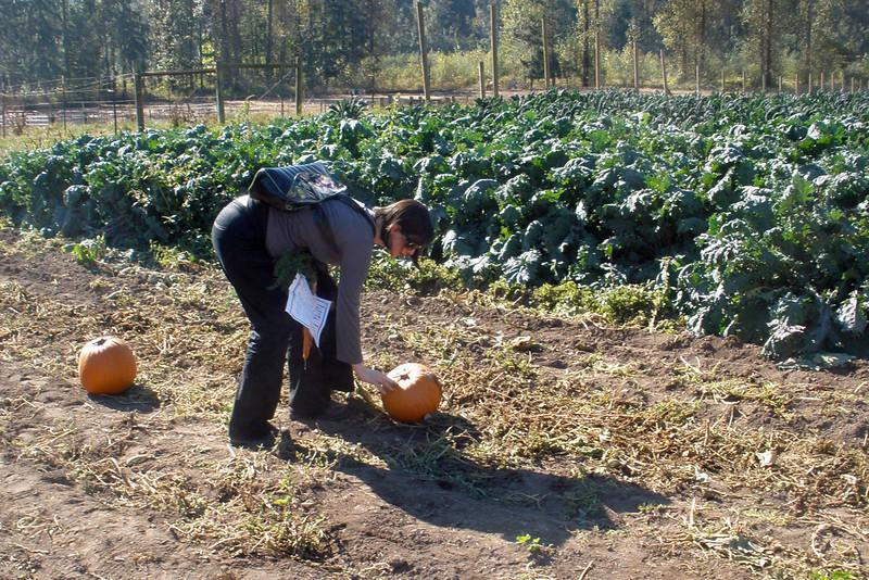 Ursula checking out the pumpkins