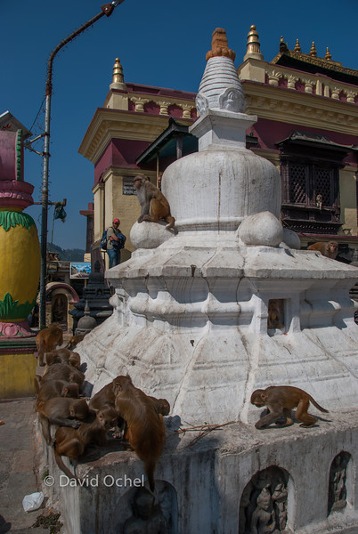 Monkeys at Swayambhunath.