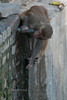 Monkeys at Swayambhunath.