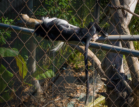 2012-11-13-SD-Zoo