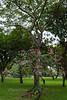 Lumphini Park.