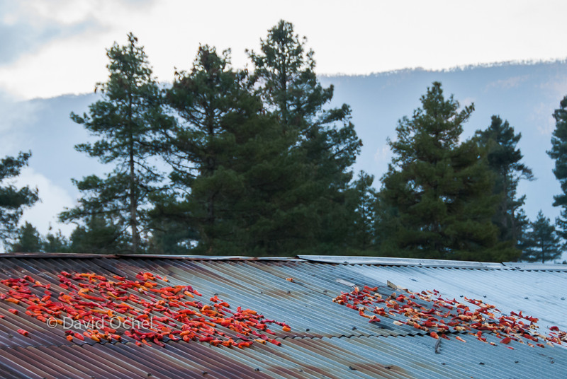 Drying chilies on the roof.