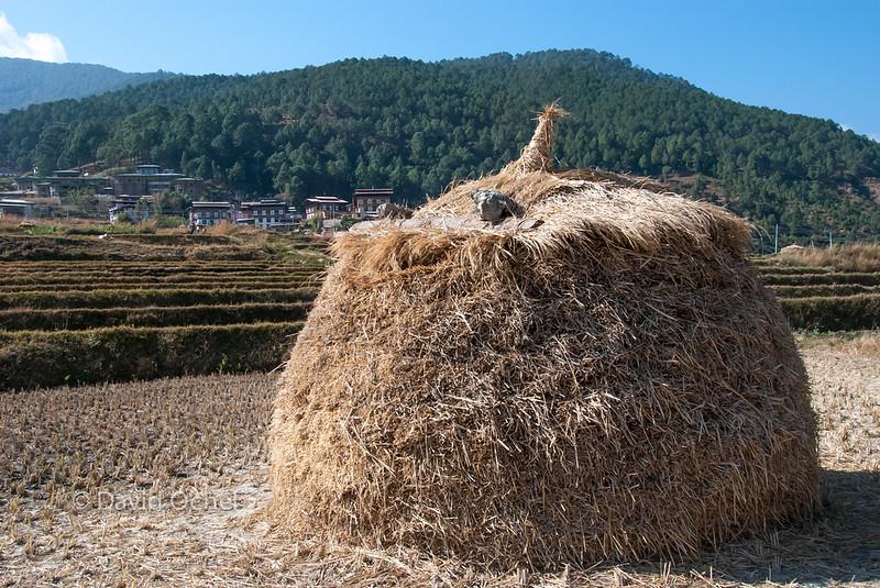 Stacking hay.