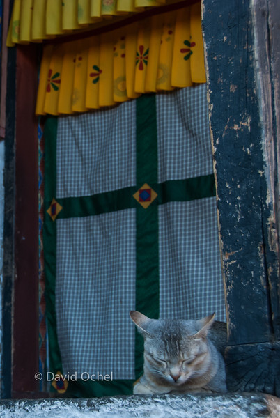 A temple kitten. Seemed like a good life.