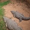 Crocodiles<br /> Mukuvisi Woodlands Game Park (MWGP)