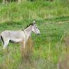 Donkey<br /> MWGP
