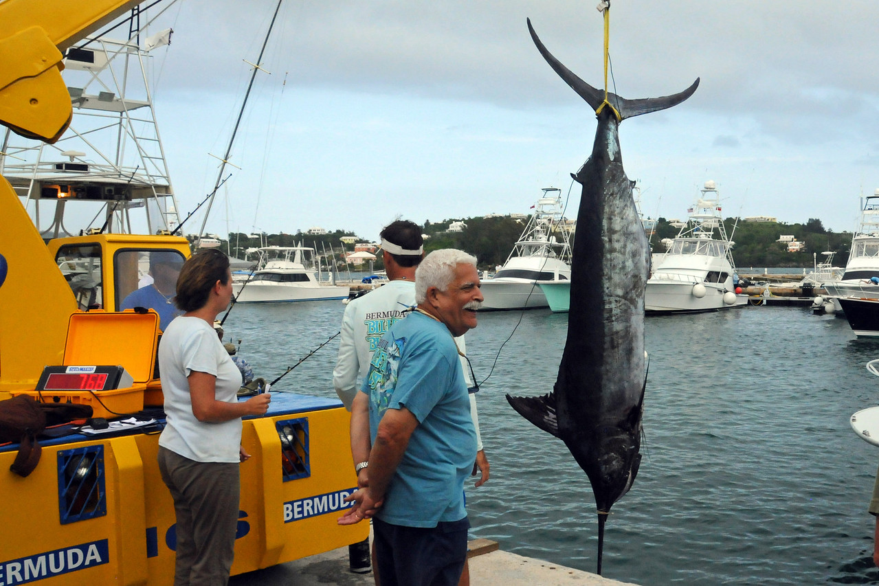 Winning Marlin at 768 pounds