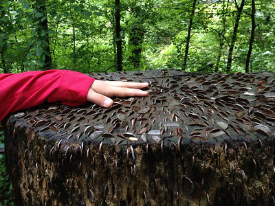 On the trail to Stockghyll Force, Ambleside, Lakes District, England.  This stump had hundreds of coins embedded in it!