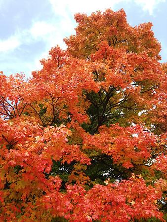 2012 Falling Leaf Rally