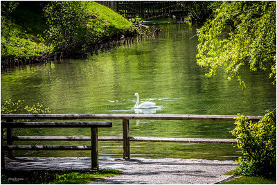 Small pond with swans on trail to Linderhof