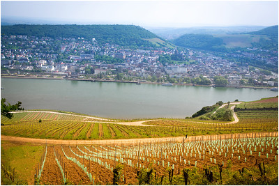 This region is known for its fertile vineyards that produce delicious wine.