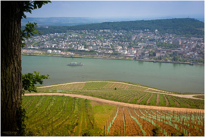 Cruise ships pass through on the Rhine river.