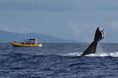 330 America II whale watch