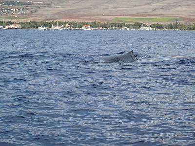 260 America II whale watch