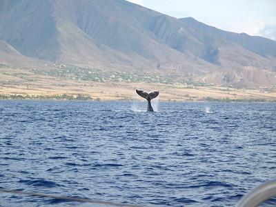 270 America II whale watch