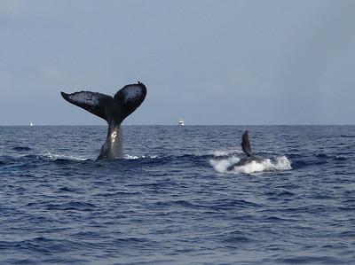 310 America II whale watch