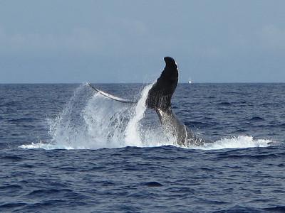 350 America II whale watch