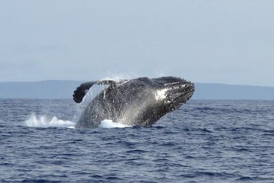340 America II whale watch