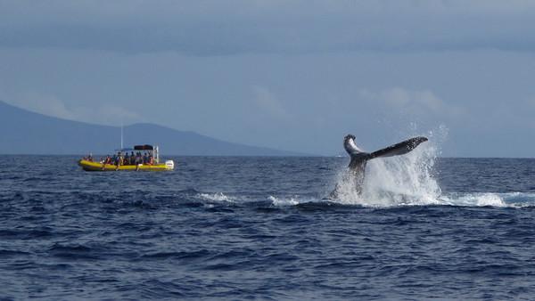 320 America II whale watch