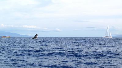 280 America II whale watch