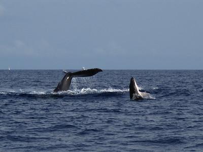 300 America II whale watch