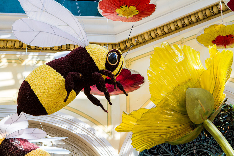Bumble Bees at the Bellagio Conservatory