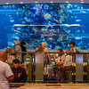 A check-in desk at the Golden Nugget with a great aquarium