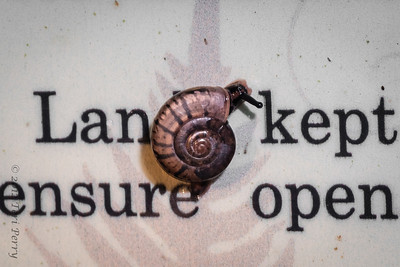 SNAIL- tiny maybe has a messsage-1578