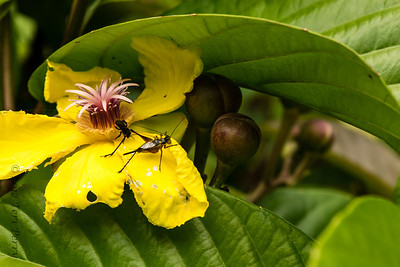 INSECT - having a visit-1144