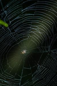 SPIDER - -1571