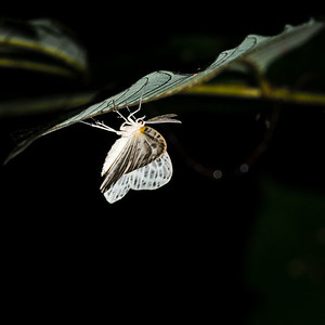 INSECT - Moth-1561