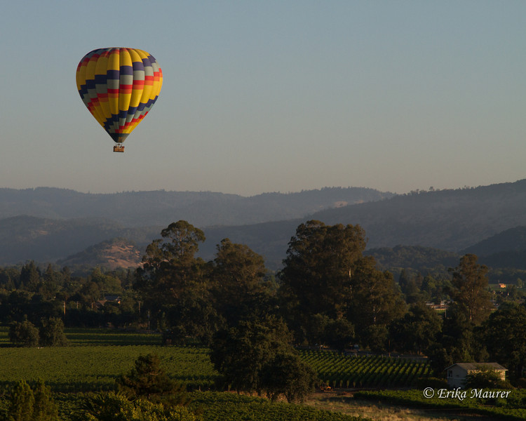Vineyards and balloons ... does it get any better?