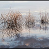 Pungo Lake reflections