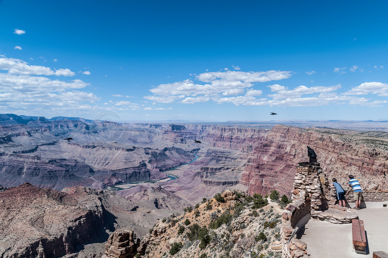 The Colorado River in the Upper Grand Canyon seen from Desert View Tower. Ravens flying about.