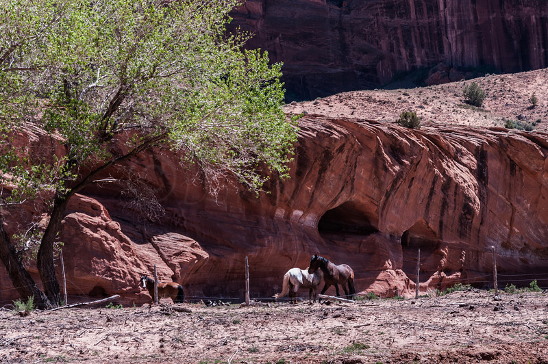 Wall erosion and horses by a Cottonwood tree.