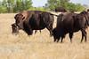 Badlands National Park, South Dakota<br /> <br /> KH4C3128