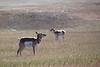 Badlands National Park, South Dakota<br /> <br /> KH4C3202