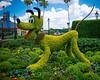 2012 Spring Flower : The 2012 Disney Spring Flower Festival