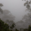 The view from Lookout Point in THe New England National Park is similarly soaked in clouds. This shot is actually almost straight down, at trees growing out of the cliffside.