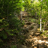 The typical look of a hiking trail in the Adirondacks. Ridden with rocks and boulders exposed by high traffic and erosion.