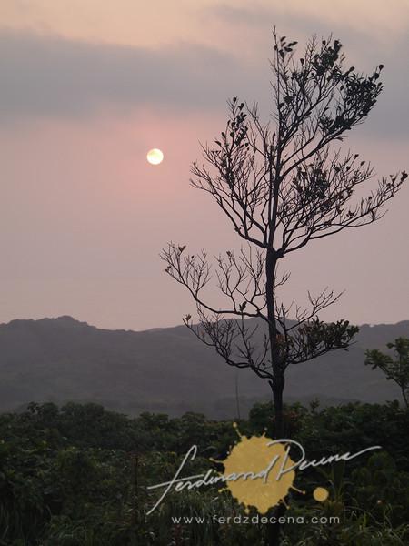 Tree, mountains, sun layers study