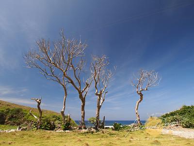 Nakabuang Beach Dramatic Trees