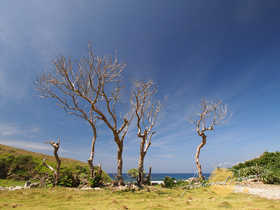 Nakabuang Beach Dramatic Trees