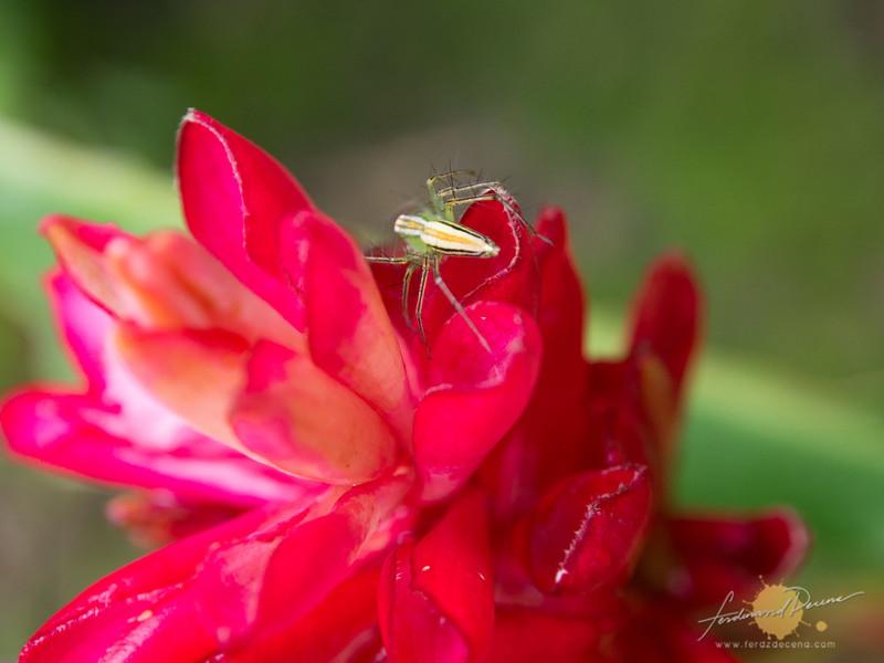Spider on a flower