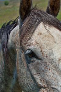 A horse comes visiting near Omak, WA