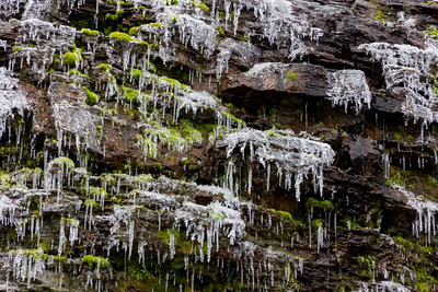 After a very cold evening, the weeping rock faces of the Hidden Lake trail are all iced up.