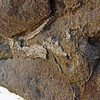 October 7, 2012.  Dinosaur bone at McInnis Canyons, Colorado.