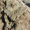 October 7, 2012.  Dinosaur bone at McInnis Canyons, Colorado.