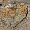 October 7, 2012.  Different colored lichens at McInnis Canyons, Colorado.