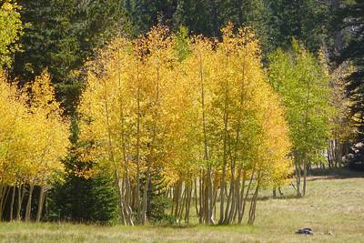 Great Basin National Park September 2012